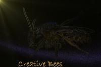Creative Bees 200